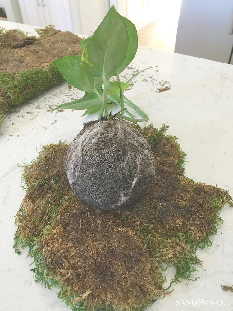 diy-kokedama-japanese-moss-ball-planters