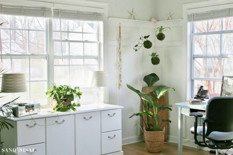 DIY Kokedama - Japanese Moss Ball Planters