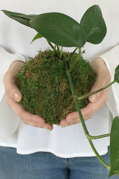 DIY Kokedama – Japanese Moss Ball Planters