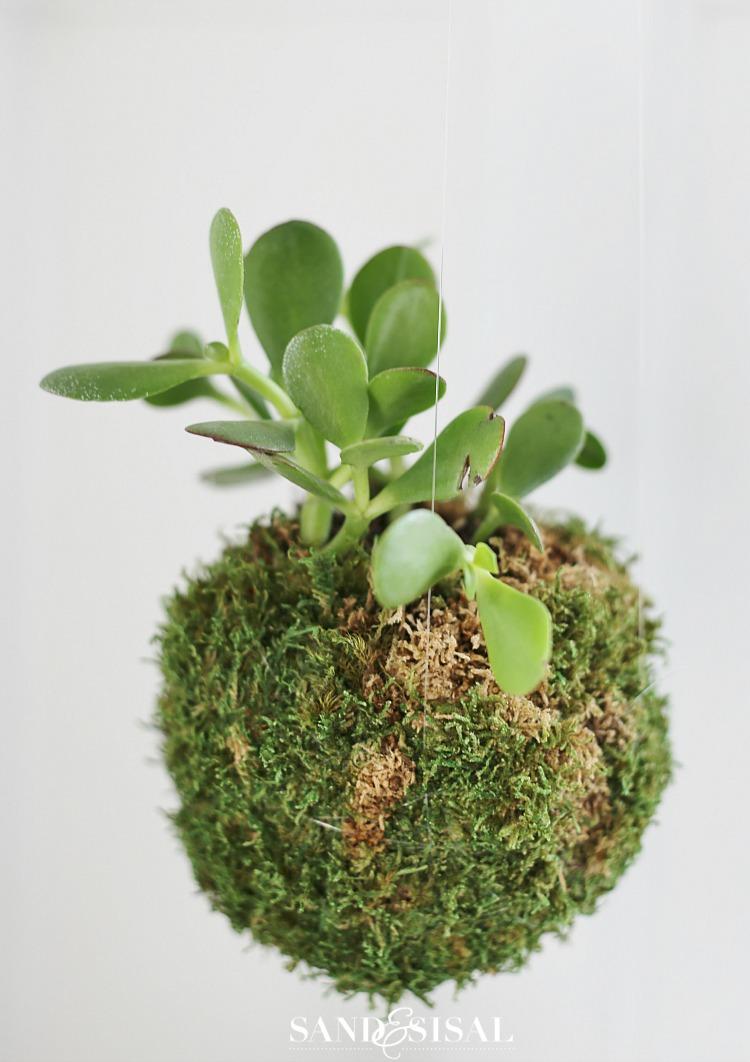 Diy kokedama japanese moss ball planters sand and sisal for Indoor japanese garden plants