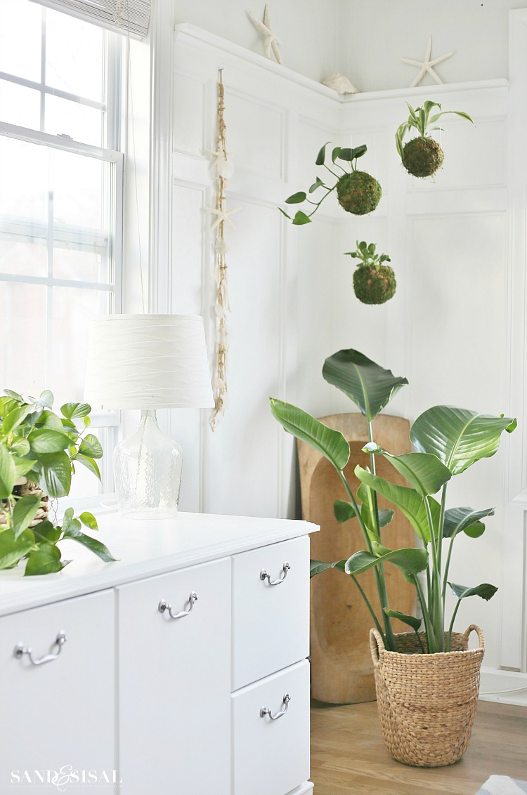 DIY Kokedama - Japanese Moss Ball Planters - Sand and Sisal on diy indoor lighting, diy indoor ponds, diy gardening, unique planters, diy planter bench plans, diy indoor stairs, diy indoor furniture, diy planter ideas, diy self-watering planter, diy planter boxes, diy indoor signs, diy mason jar planter, diy indoor hammocks, diy indoor wall art, diy indoor water features, diy indoor shelves, diy indoor fences, diy indoor columns, diy wall decor, diy indoor benches,