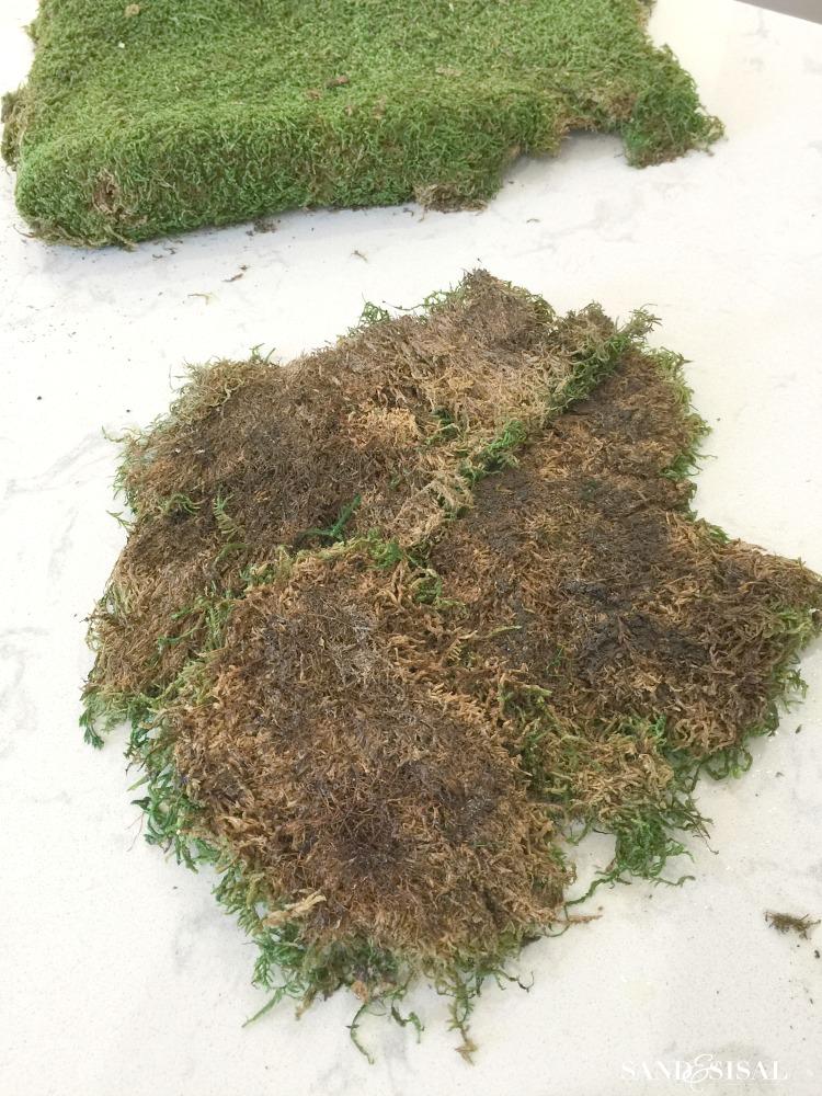 diy-kokedama-sheet-moss