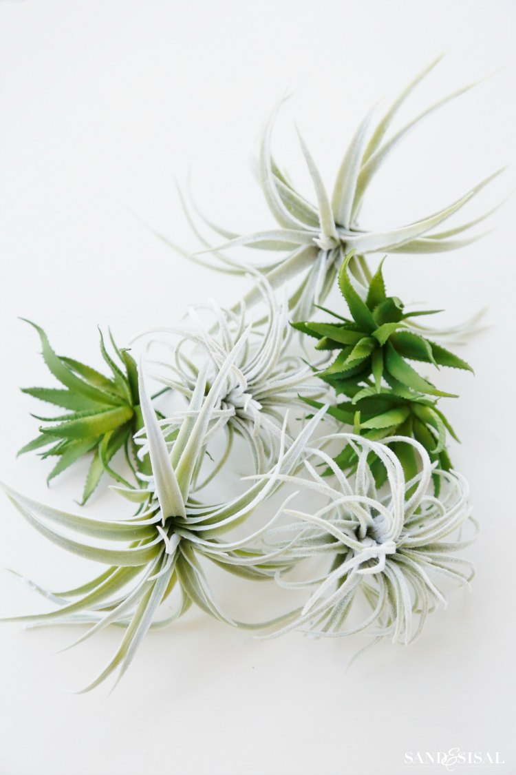 faux-succulents-and-air-plants