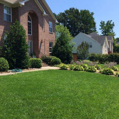 healthy-lawn