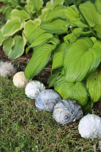 Shell Garden Edging - Creative Garden Edging Ideas