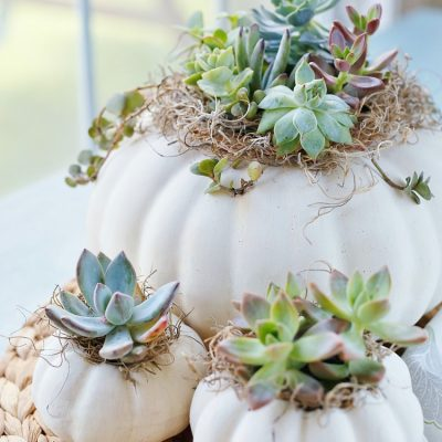 Succulent Pumpkin Planters