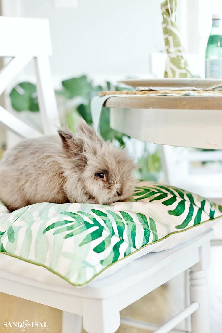 Easter Bunny - Bun Bun