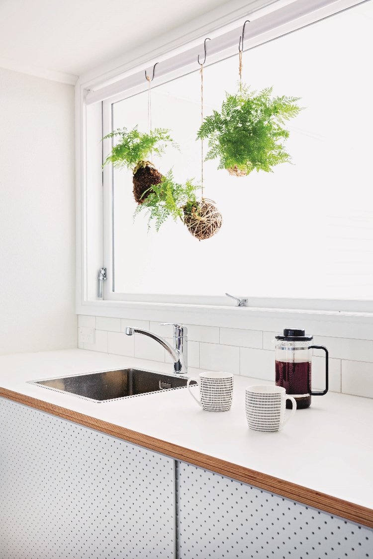 Kokedama in the kitchen