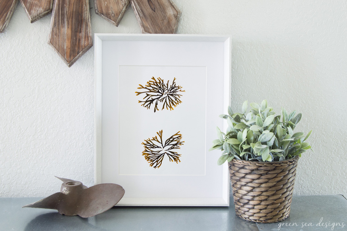Coastal Botanical Art by Green Seas Designs