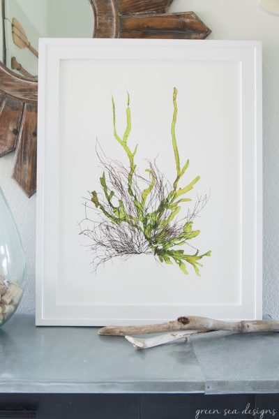 Coastal Botanical Art by Green Seas Designs