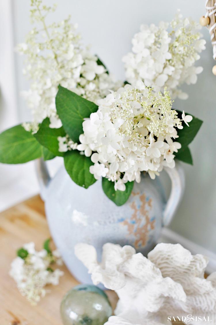 White Panicle Hydrangeas