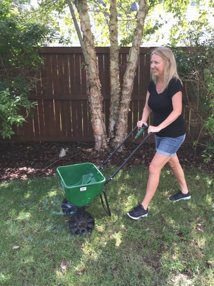 reseeding a lawn