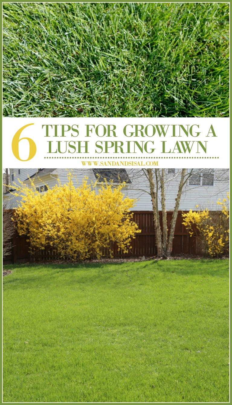6 Tips for Growing a Lush Spring Lawn