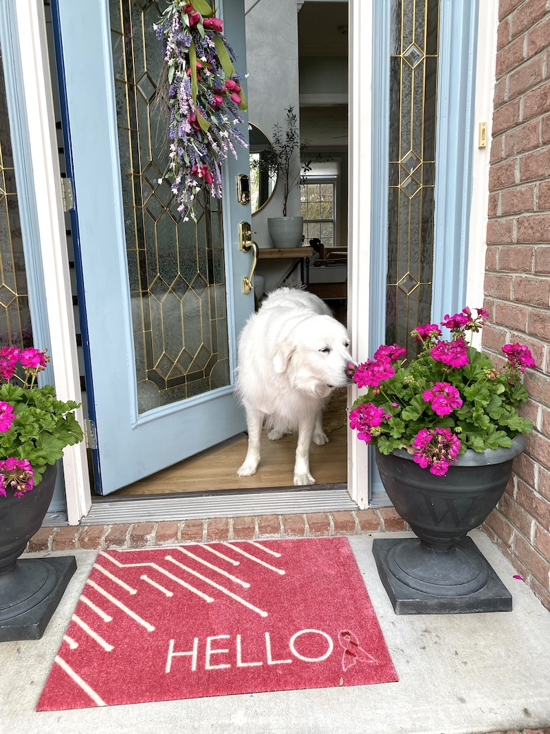 Great Pyrenees smelling the flowers