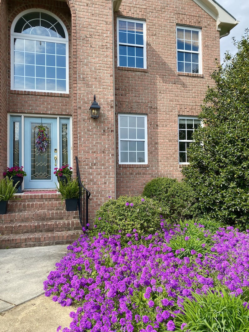 Brick House with Purple Homestead Verbena